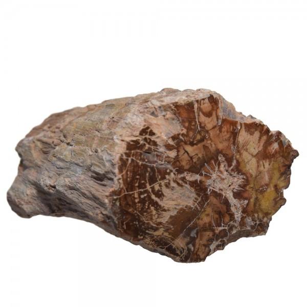 Versteinertes Holz Baumstamm N°365