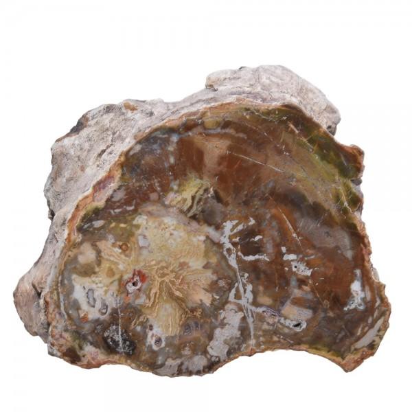 Versteinertes Holz Baumstamm N°379